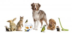 dogs cats exotic and pocket pets